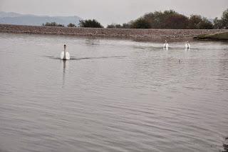 Λίμνη του Αγίου Βησσαρίωνα΄2