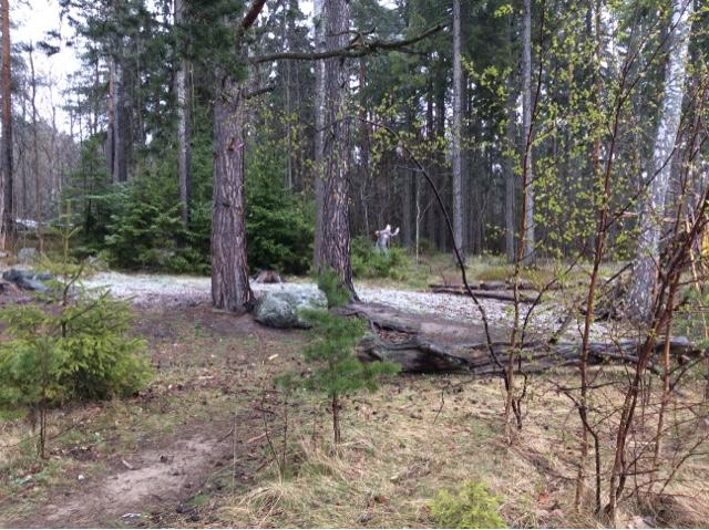 Vem ropar i skogen