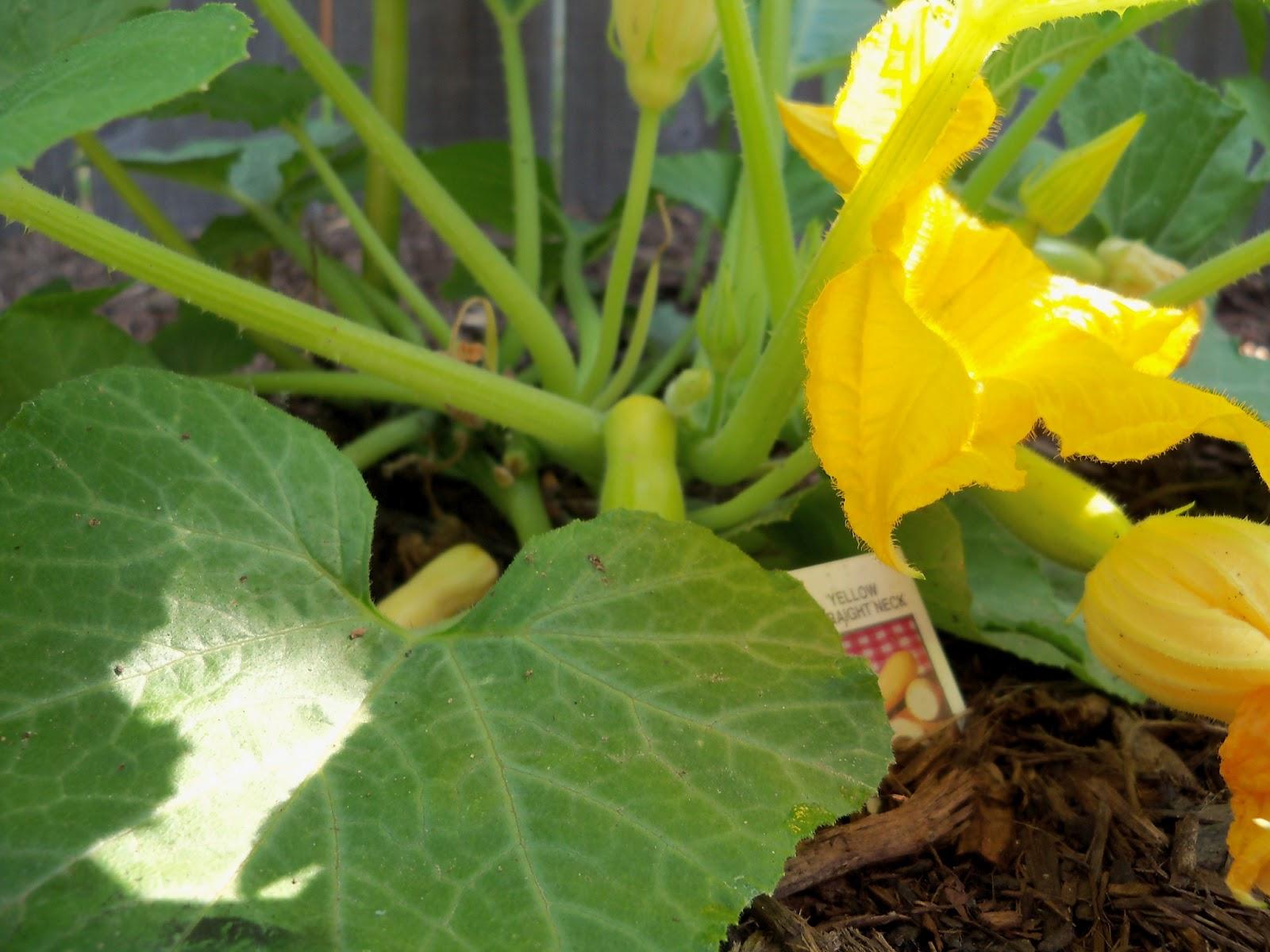 Gardening 2011 - 100_7860.JPG