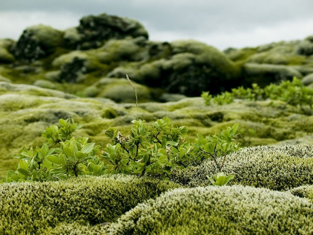 mossy-lava-fields-iceland-3