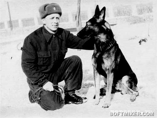 djulbars1946