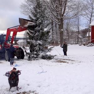 Julgransuppsättning 2012