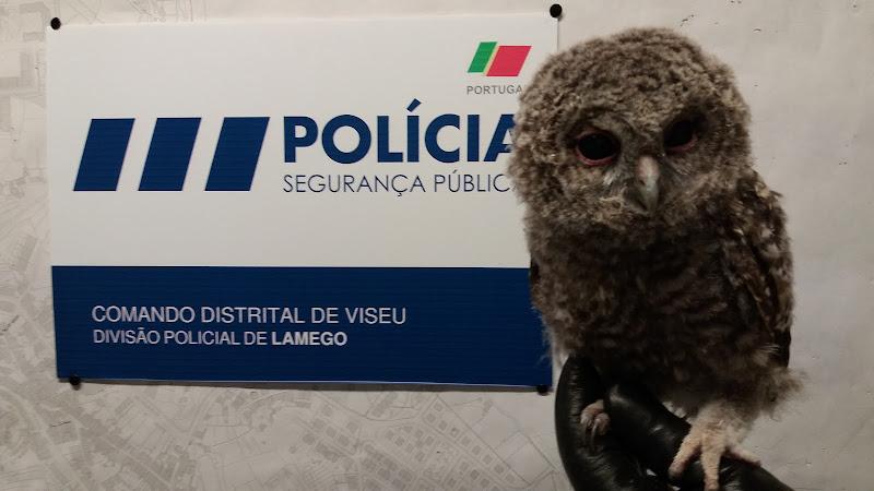 PSP de Lamego salva coruja