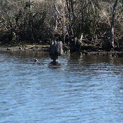 Fowl Marsh from Boat Feb3 2013 206