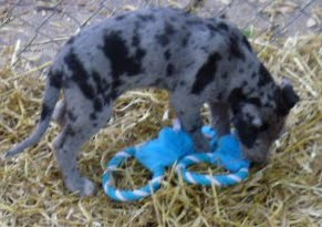 Thelma & Garths 3/21/12 litter - SAM_3274.JPG