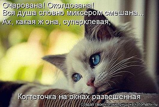 1423818983_kotomatricy-7