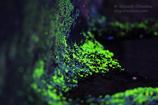 Macro photo of moss in a cave