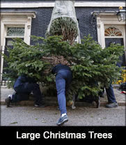 Large Christmas tree installation