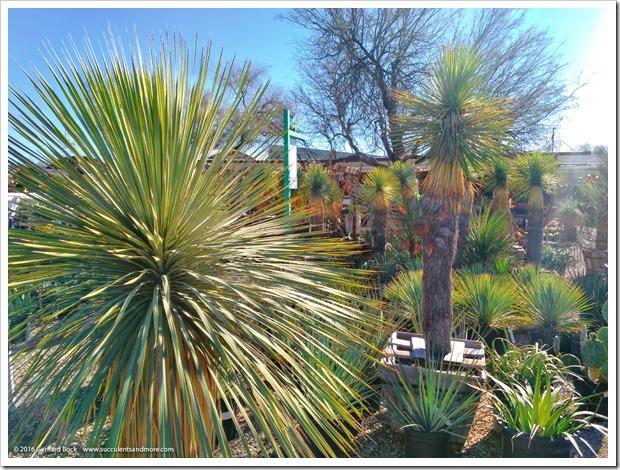 151230_Tucson_Mesquite-Valley-Growers_0042
