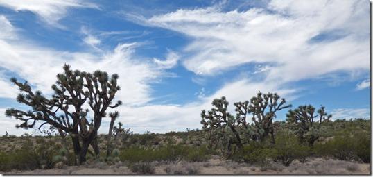 More desert along US 93