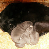 Star & True Blues February 21, 2008 Litter - HPIM0966.JPG