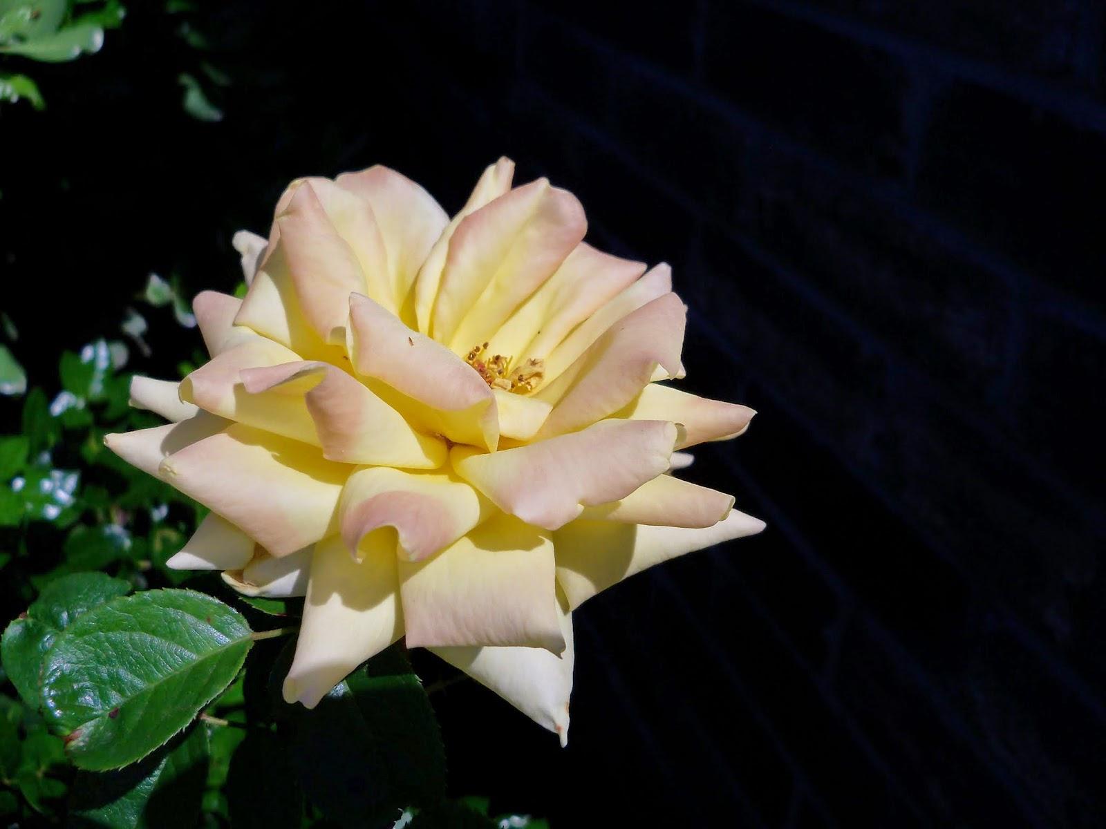 Gardening 2014 - 116_1559.JPG