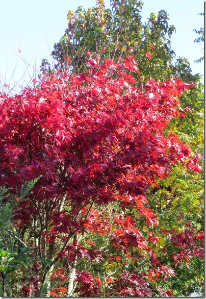 Autumn Colours May 2017 two