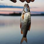 20140517_Fishing_Bochanytsia_003.jpg