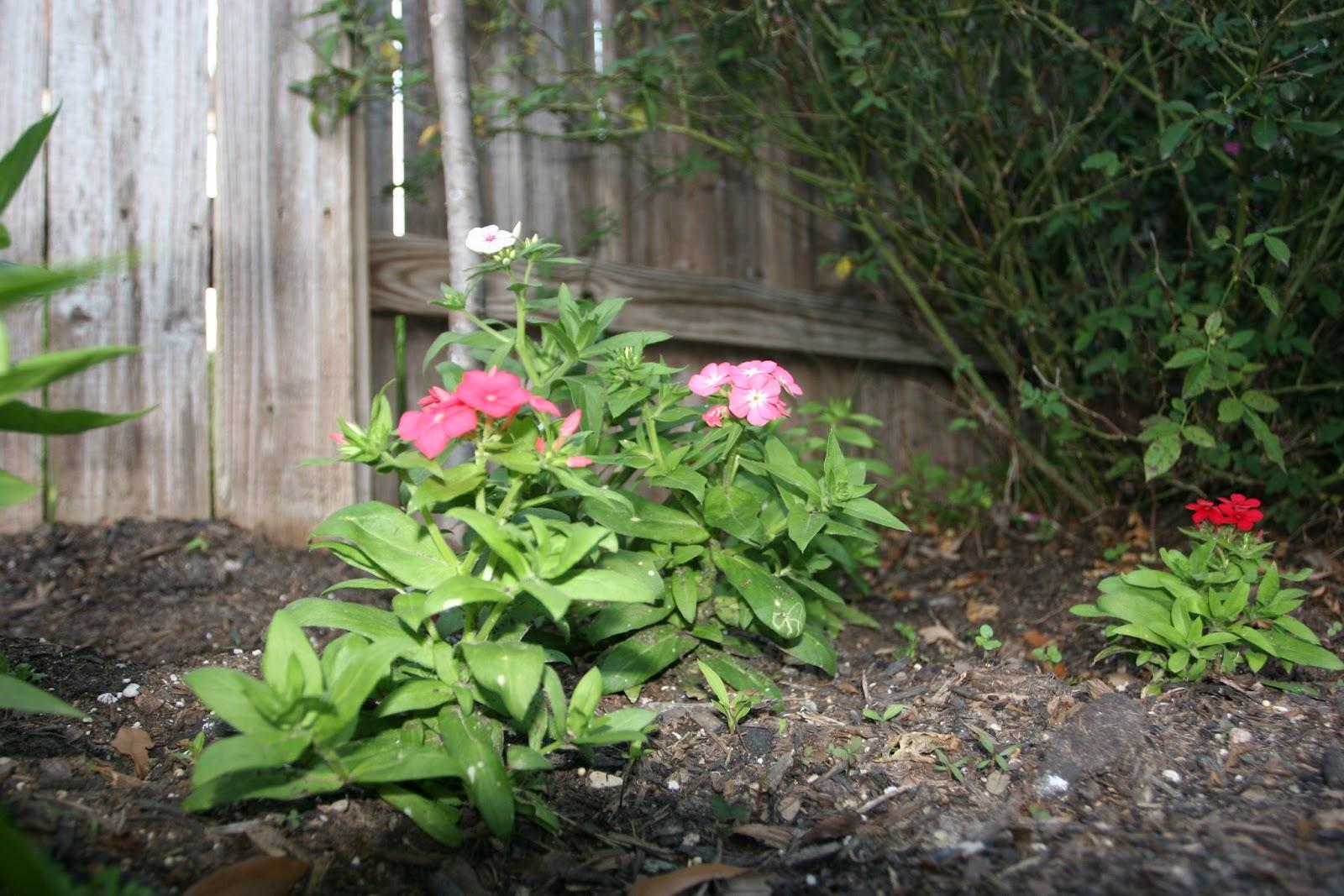 Gardening 2012 - IMG_2722.JPG