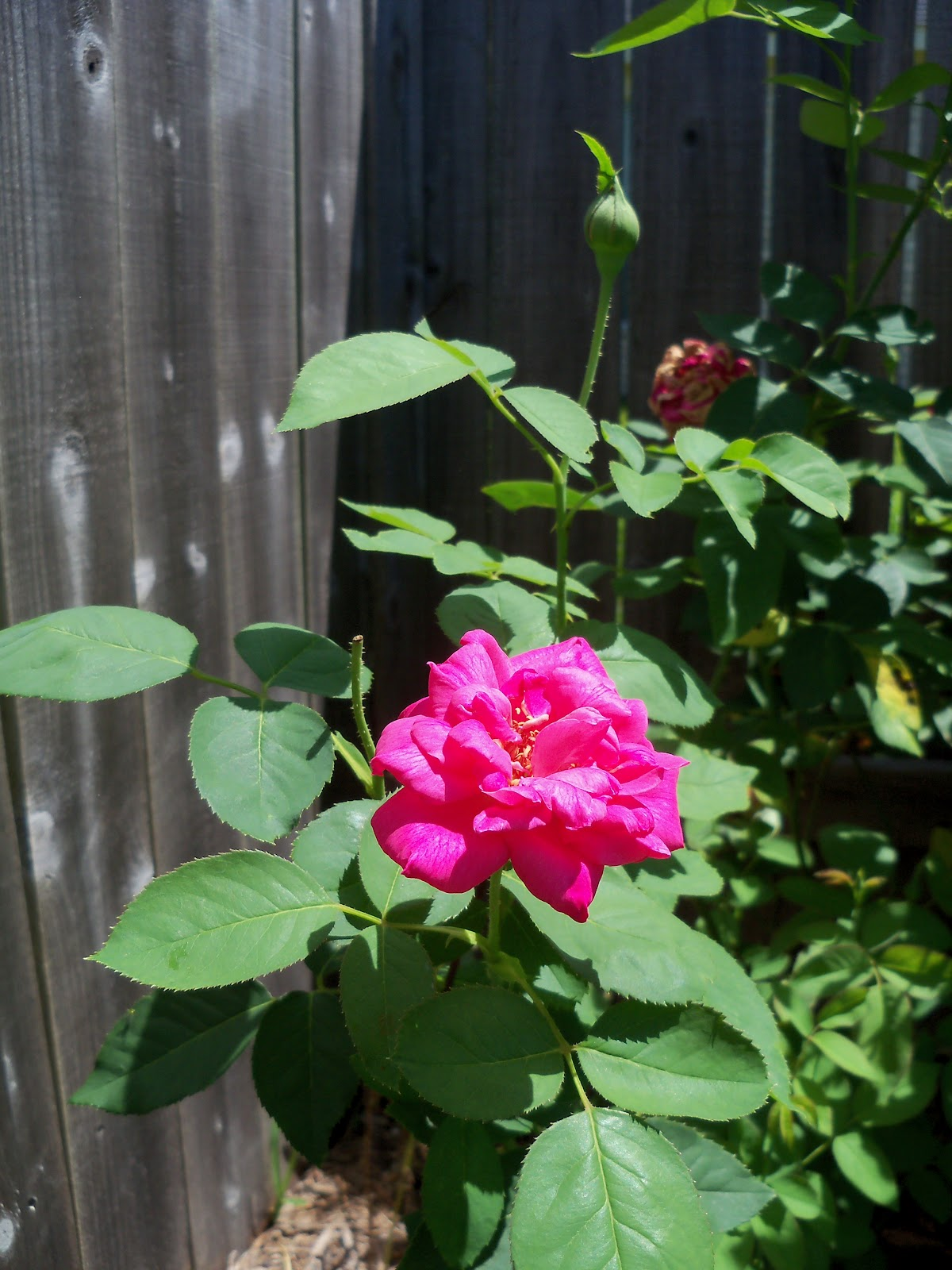 Gardening 2010, Part Three - 101_4453.JPG