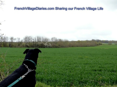 french village diaries dog walking deer silent sunday