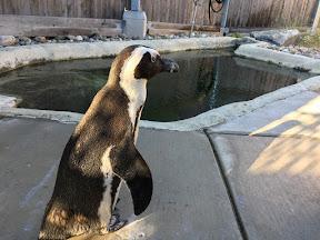 penguin_1_1