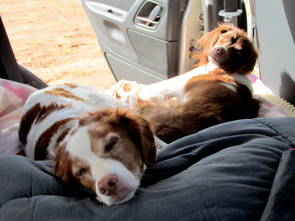 Torrey and Boulder sunning in the Jeep