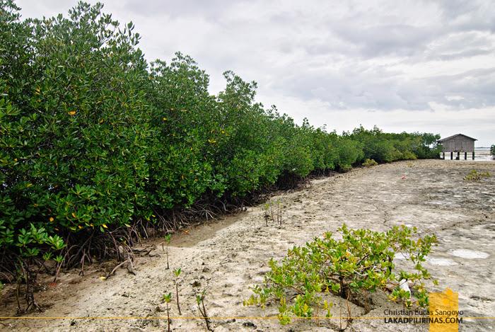 Mangroves at Olango Island Wildlife Sanctuary in Cebu