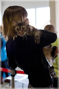 cats-show-24-03-2012-fife-spb-www.coonplanet.ru-009.jpg