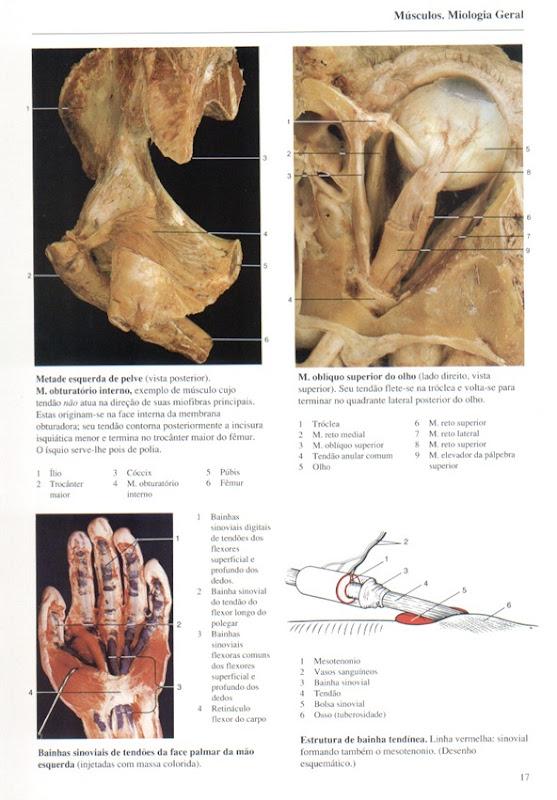 017 M_sculos, Miologia Geral