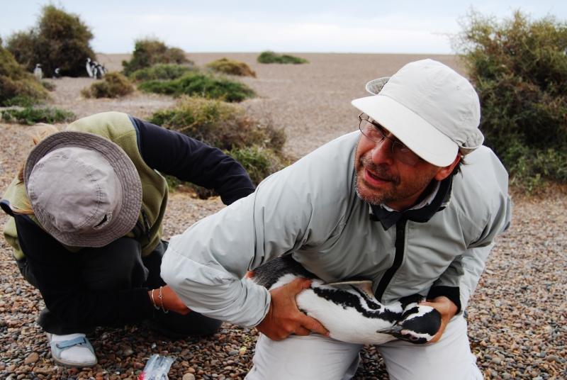 Biologistes_et_pingouins_14
