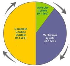 cardiac-cycle
