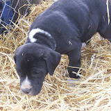 Star & True Blues February 21, 2008 Litter - HPIM1105.JPG