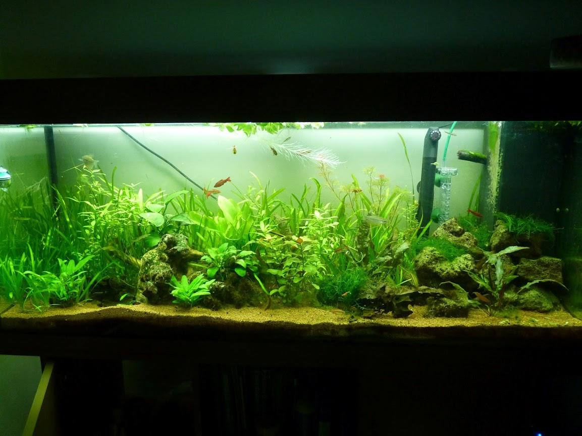 Ma petit histoire Aquariophile de 2009 à aujourd'hui  P1030639