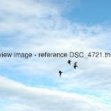 DSC_4721.thumb.jpg