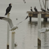 01-26-13 White Rock Lake - IMGP4379.JPG