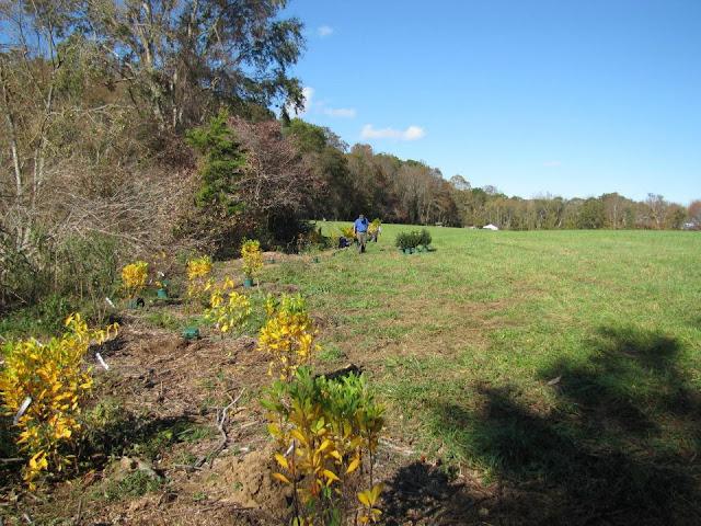 Guilford Salt Meadows Sanctuary Planting - 297815_10150343197144480_730539479_8052578_730142769_n.jpg