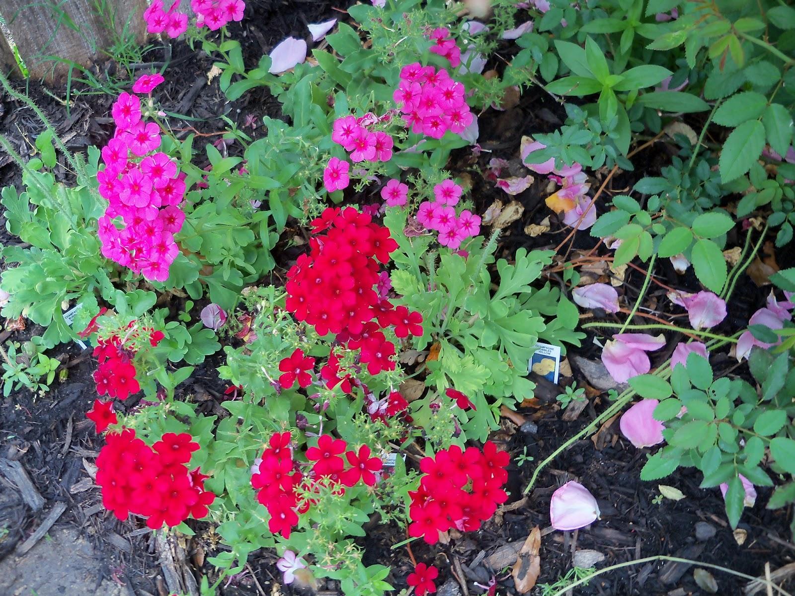 Gardening 2011 - 100_7342.JPG