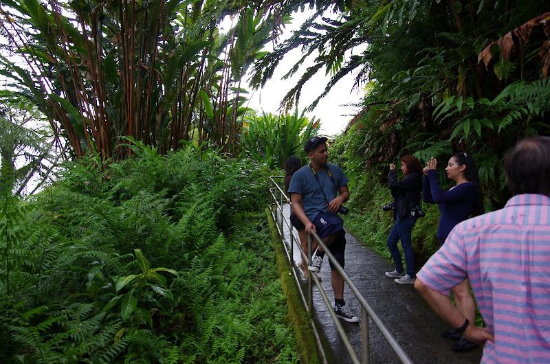 06-23-13 Big Island Waterfalls, Travel to Kauai - IMGP8880.JPG