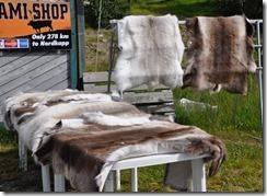 6 echoppe Sami peaux de rennes