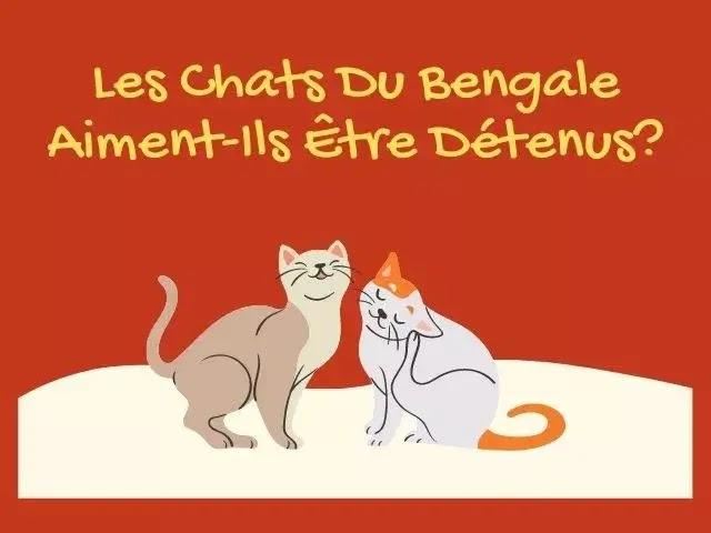 Les Chats Du Bengale Aiment-Ils Être Détenus?