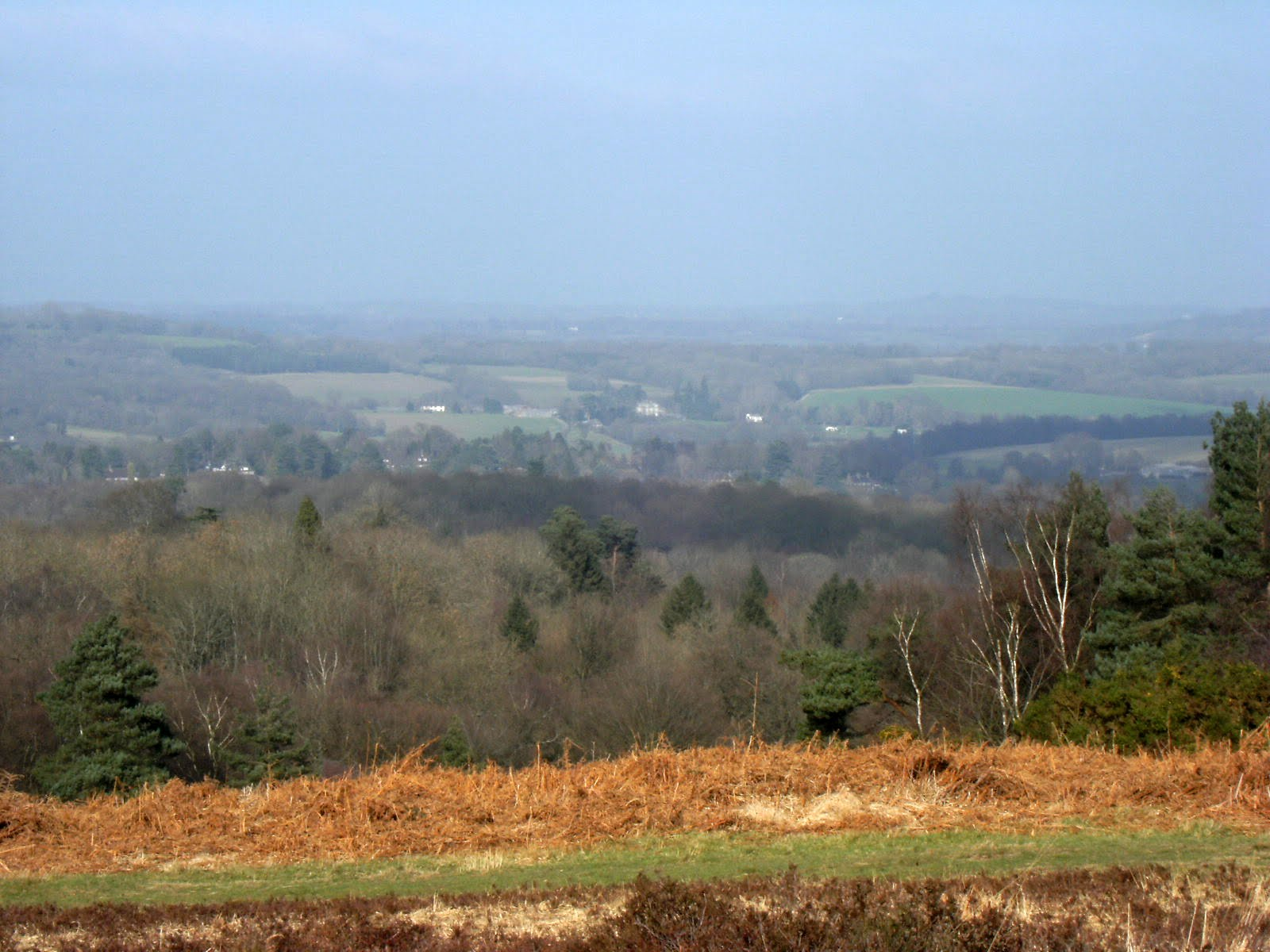 1103030054 View from Ashdown Forest
