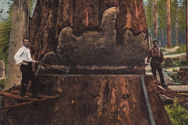Big redwood postcard 640