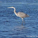 04-06-12 Myaka River State Park - IMGP9915.JPG