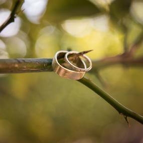 by Michael Keel - Wedding Details ( autumn, rings, wedding rings )