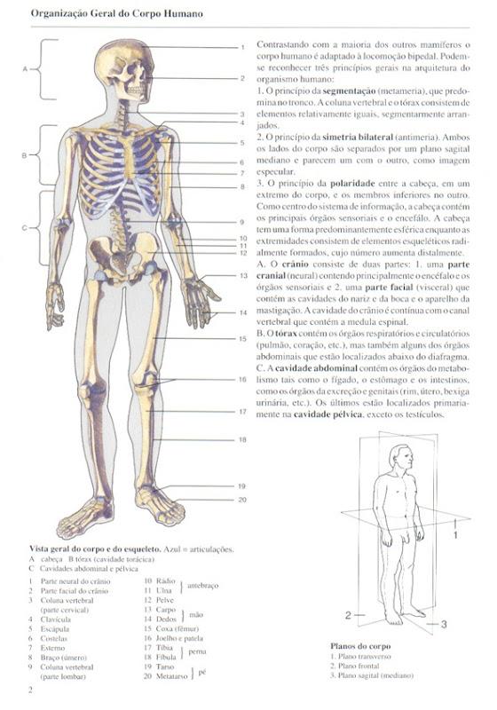 002 Organiza__o Geral do Corpo Humano