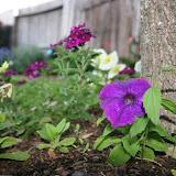 Gardening 2012 - IMG_2752.JPG
