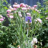 Gardening 2010, Part Three - 101_4382.JPG