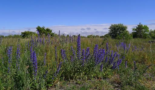 2015-06-14 005(Gotland)cf.jpg