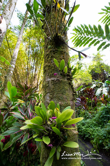 From waterfalls to exotic plants and delicious poke missvacation - Flowers that grow on tree trunks ...