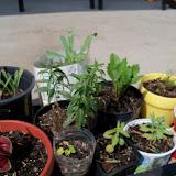 Gardening 2010, Part Two - 101_3453.JPG