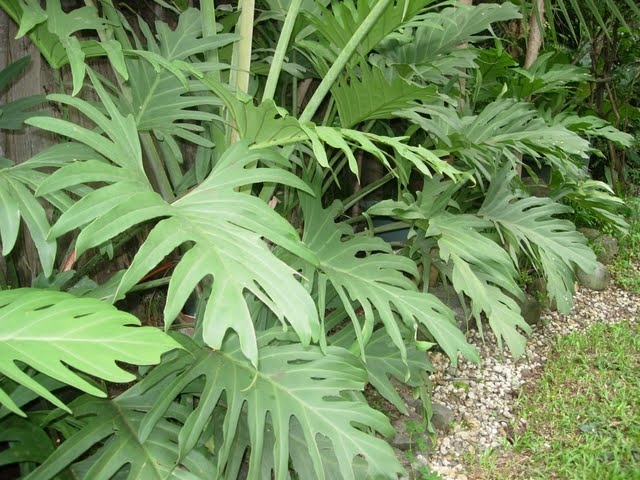 Grow Fresh Air Plants - DSCN0314.JPG