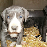 Star & True Blues February 21, 2008 Litter - HPIM1099.JPG