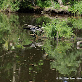 04-07-12 Homosassa Springs State Park - IMGP4526.JPG